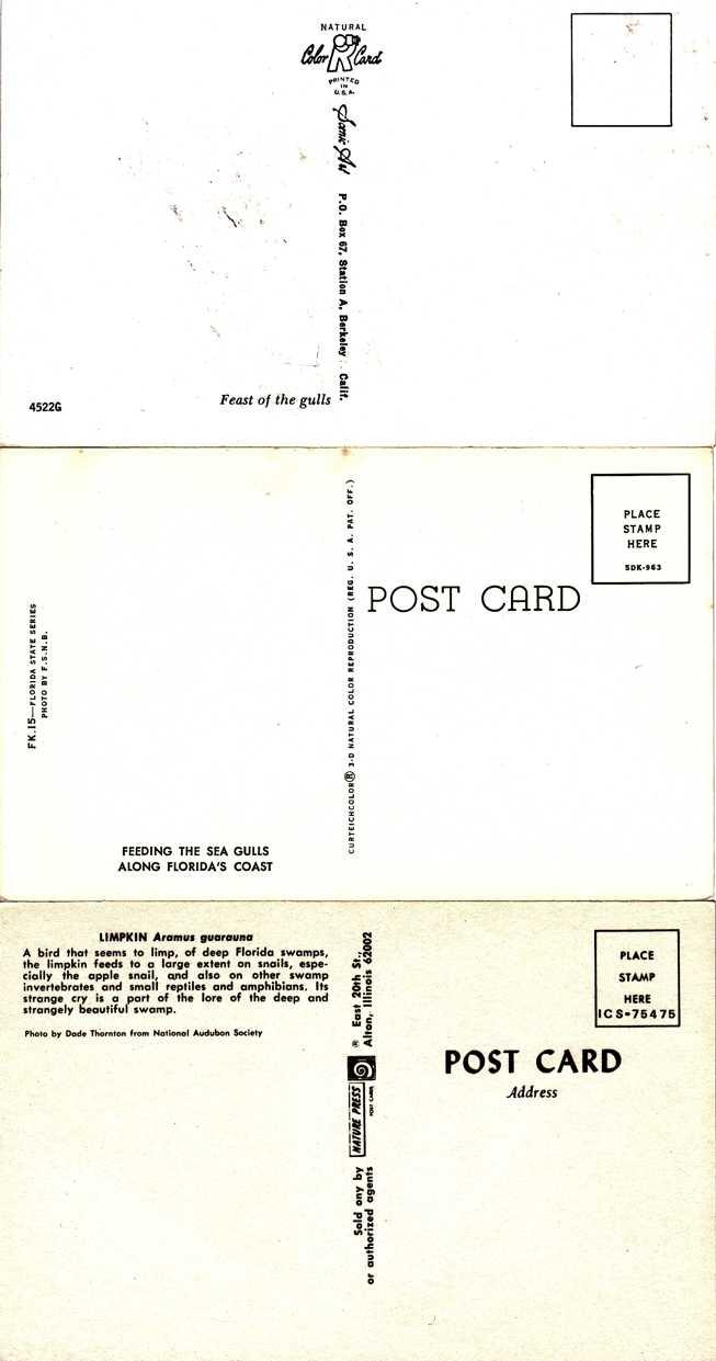 (3 cards) Birds of Florida - Sea Gulls - Pelican - Limpkin