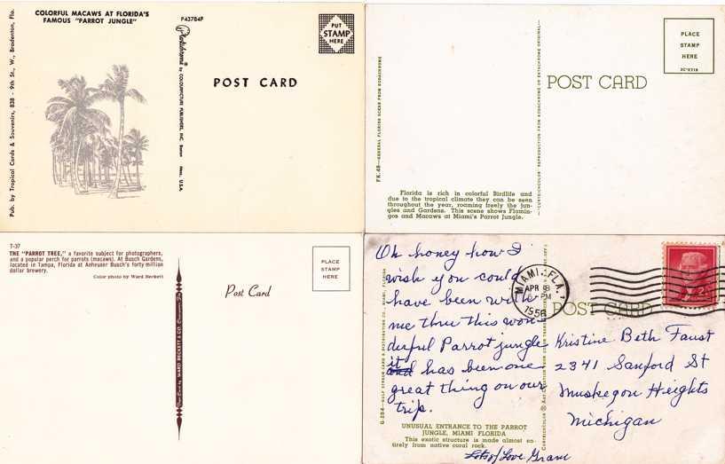 (4 cards) Parrots - Exotic Florida Birds - pm 1956 at Miami