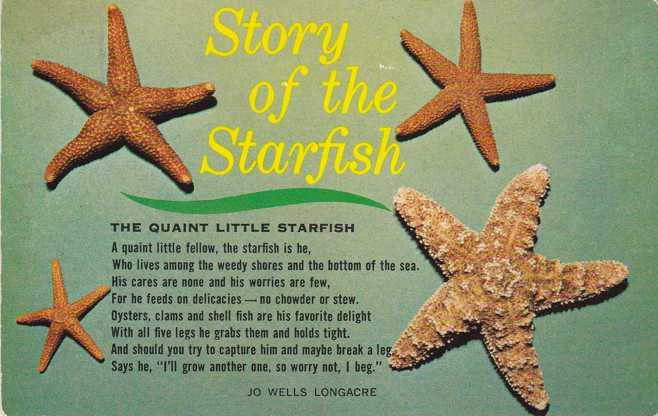 Story of the Quaint Little Starfish by Jo Wells Longacre - pm 1968 at Bonita Springs FL