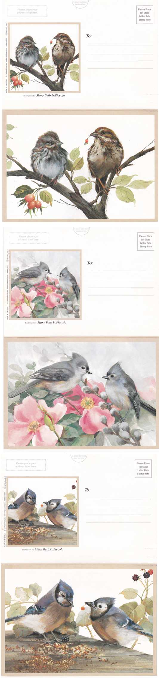 (3 cards) Bird Drawings - Artist Signed Mary Beth LoPiccolo - Double Post Cards