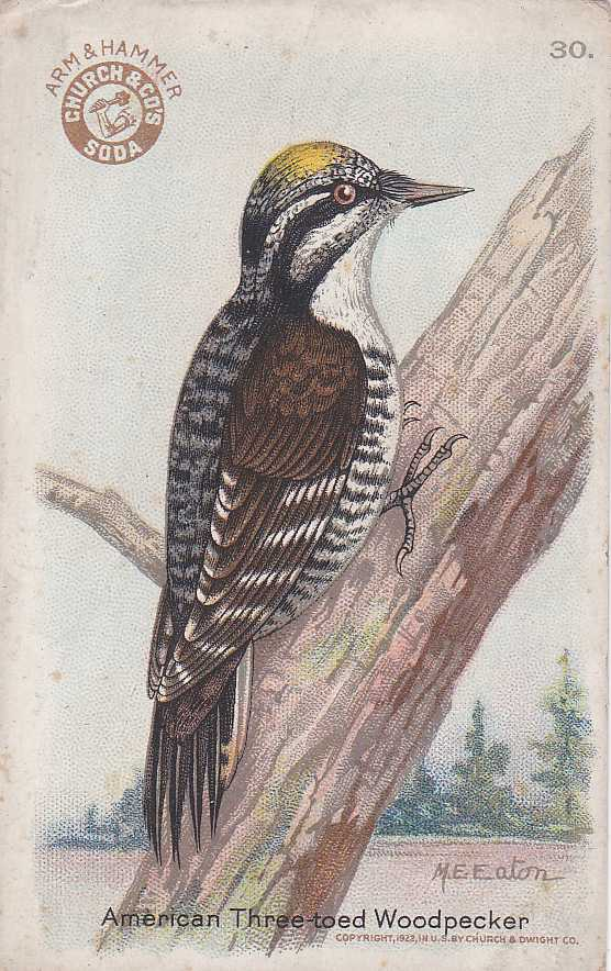 American Three-toed Woodpecker - Arm & Hammer Trade Card
