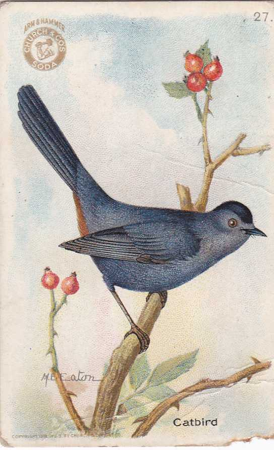 Catbird - Useful Birds 1918 - Arm & Hammer Trade Card