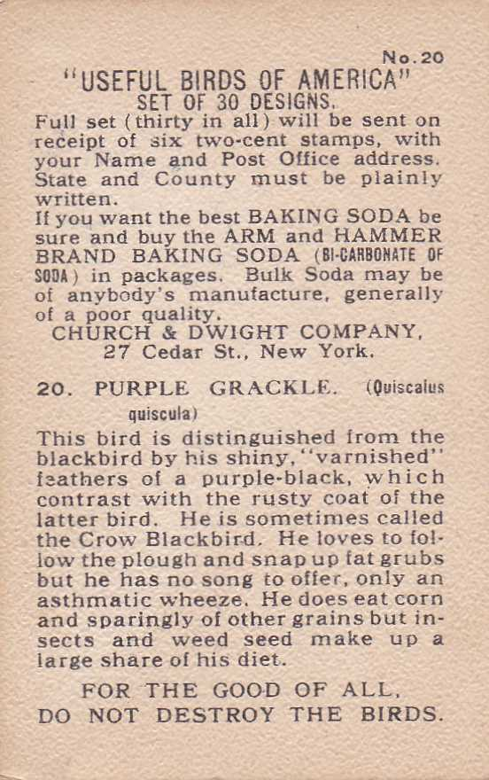 Purple Grackle - Useful Birds 1915 - Arm & Hammer Trade Card