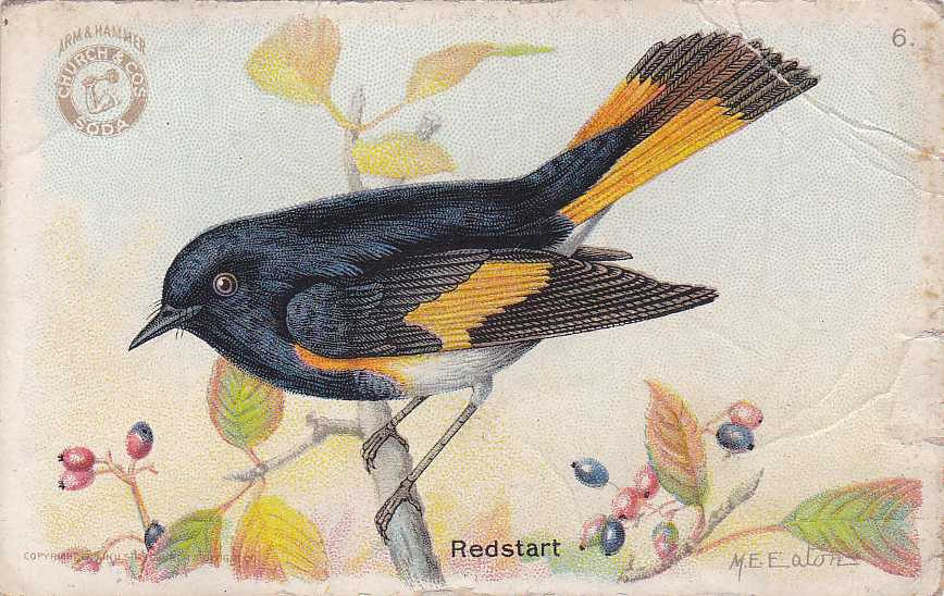 Arm & Hammer Trade Card - Redstart - Useful Birds