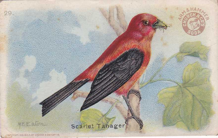 Scarlet Tanager - Useful Birds - Arm & Hammer Trade Card