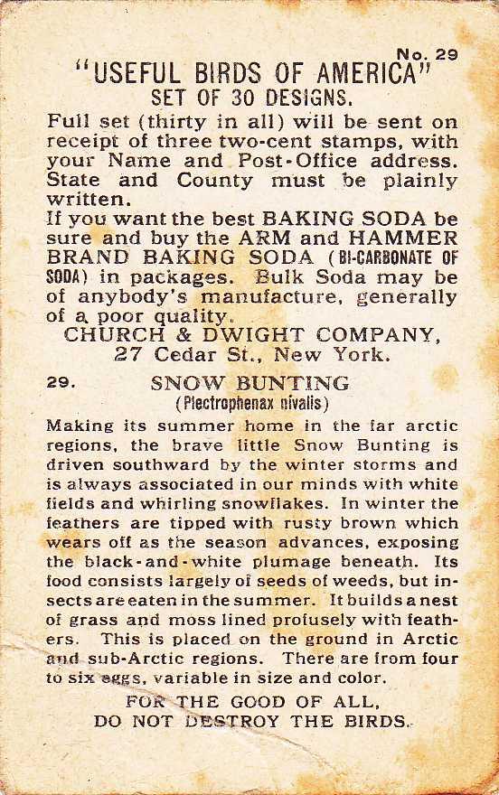Snow Bunting - Useful Birds 1918 - Arm & Hammer Trade Card