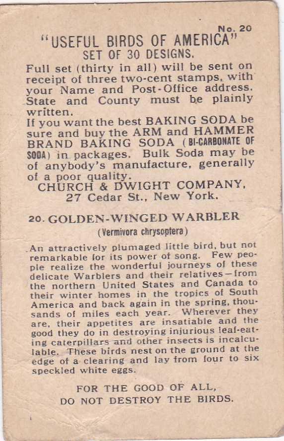 Golden-Winged Warbler - Useful Birds - Arm & Hammer Trade Card