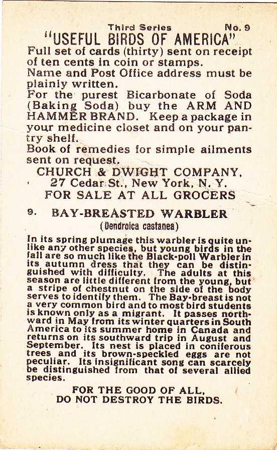 Bay-breasted Warbler - Beautiful Birds - Arm & Hammer Trade Card