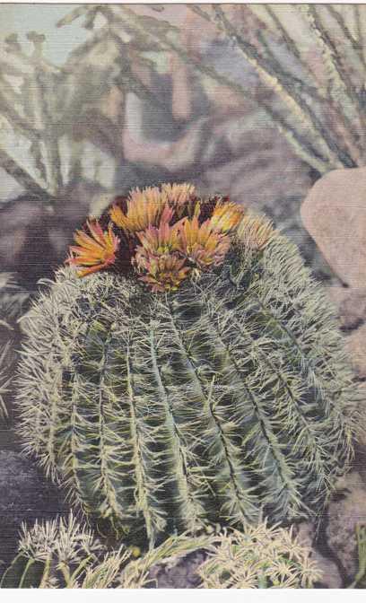 Barrel Cactus - Southwest US Desert Flower - Linen Card