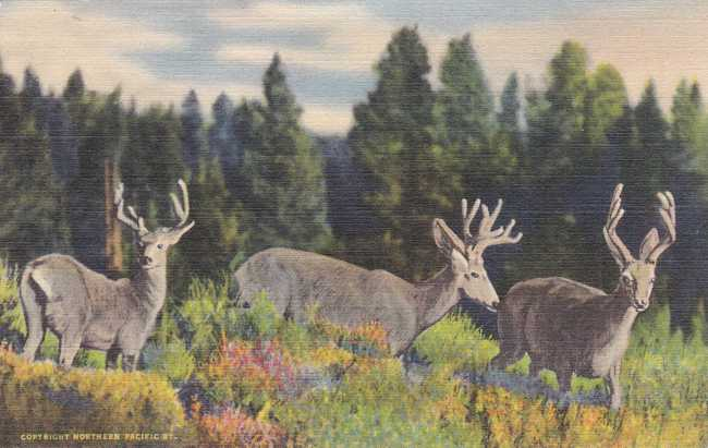 Three Deer in the Rocky Mountains - Linen Card
