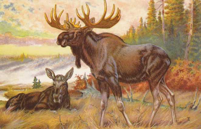 Bull Moose and Cow - Artist W. J. Wilwerding