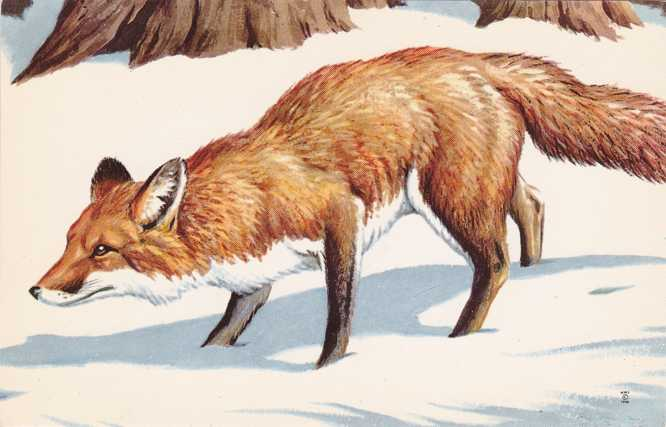 Red Fox - Artist Don Eckleberry