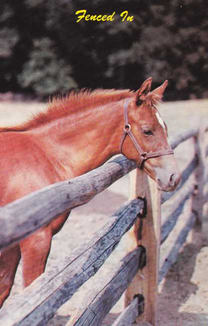 Horse Fenced In