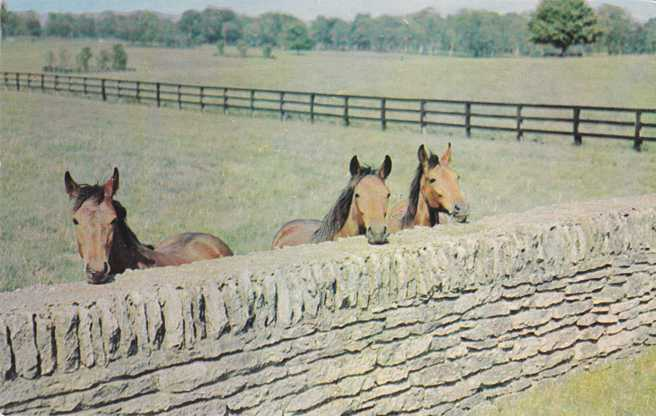 Horses and Stone Fence - Castleton, Fayette Country, Kentucky