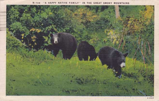 Happy Bear Family in the Great Smoky Mountains - pm 1946 - Linen Card