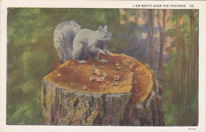 Squirrel - Nutty over the Poconos, Pennsylvania - White Border