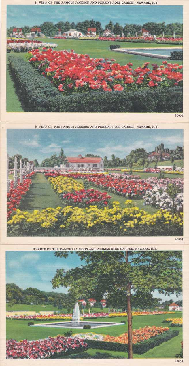 (3 cards) Jackson and Perkins Rose Gardens - Newark, New York - Linen Card