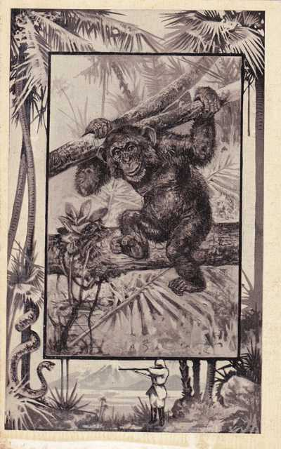Chimpanzee - Africa Animal - Copyright 1909 M J Mintz of Chicago - Divided Back