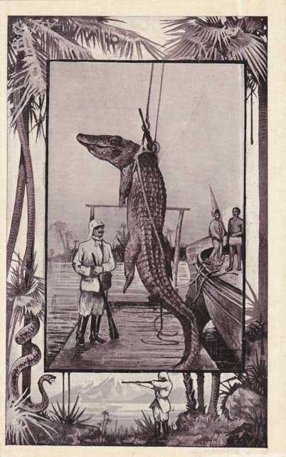 Captured Crocodile - Africa Animal - Copyright 1909 M J Mintz of Chicago - Divided Back