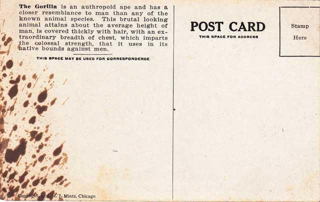 Gorilla - Africa Animal - Copyright 1909 M J Mintz of Chicago - Divided Back