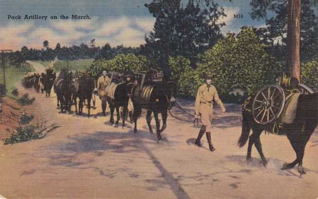 Horse Back - Pack Artillery on the March - Military - Linen Card