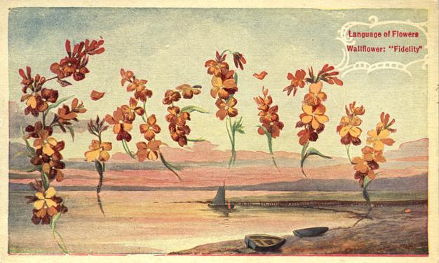 Language of Flowers - Wallflower - Fidelity - White Border