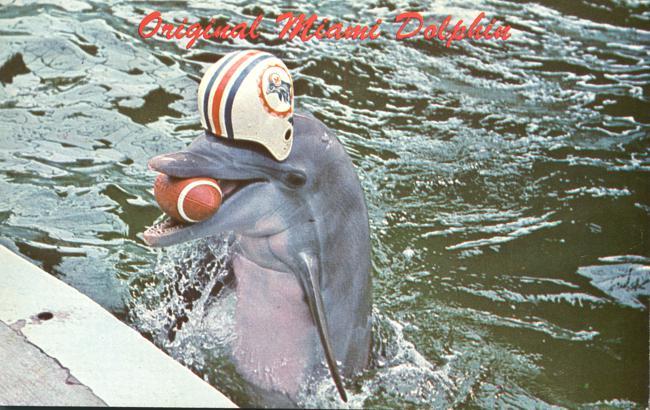 Miami Dolphin Quaraterback - Miami Seaquarium, Florida - pm 1969