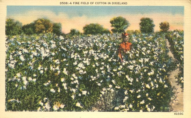 Fine Field of Cotton in Dixieland - Agriculture - Linen Card