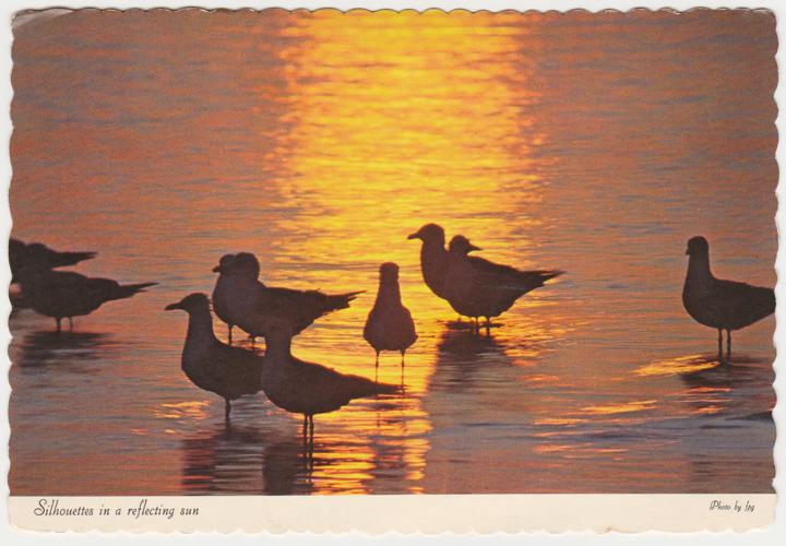Sea Gulls - Silhouettes in a Reflecting Sun - Mailed from Atlantic City, New Jersey - pm 1977