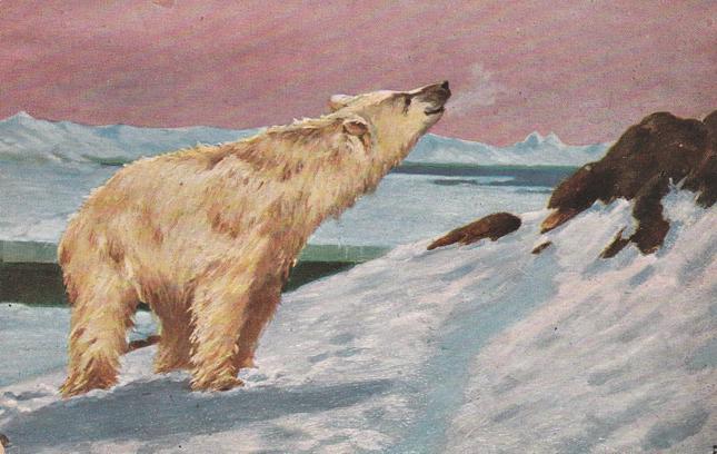 Polar Bear from International Art Co. - Divided Back - Animal