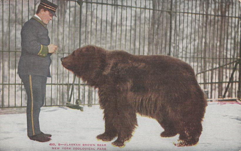 Alaskan Brown Bear - New York City - Zoological Park - Bronx Zoo - Divided Back