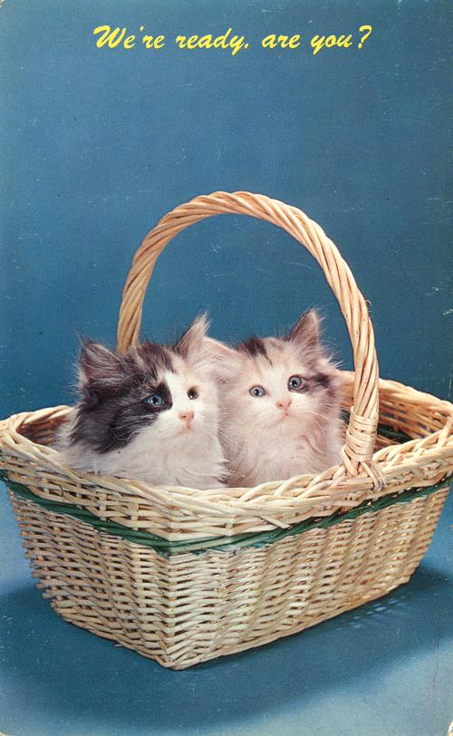Kittens in Basket - We're Ready to Go - Animal Cat