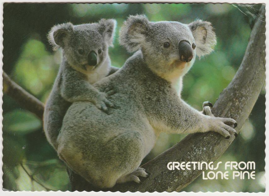 Greetings from Lone Pine - Koala Bear Sanctuary, Australia