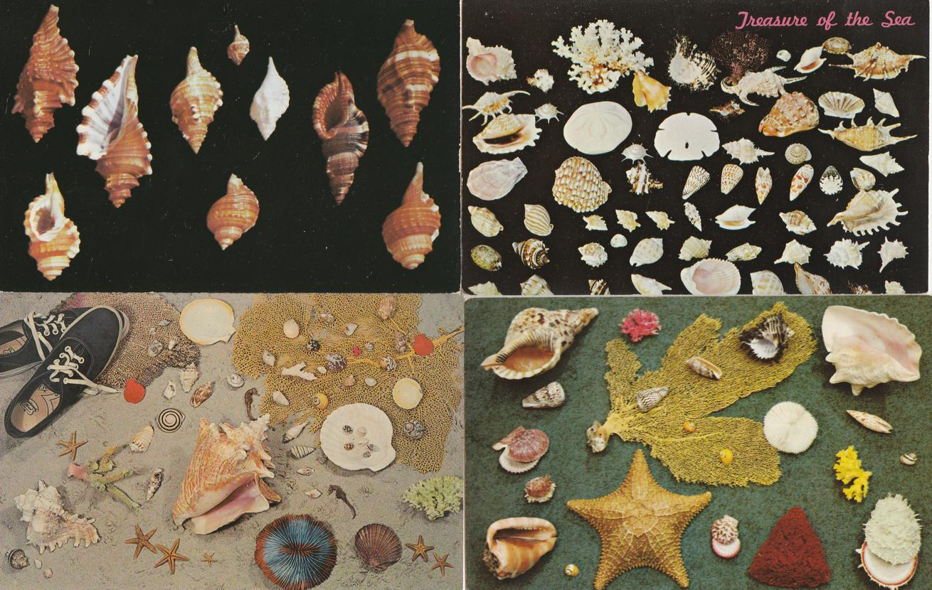 (4 cards) Sea Shells - Sea Life - Atlantic Coast - Gulf of Mexico