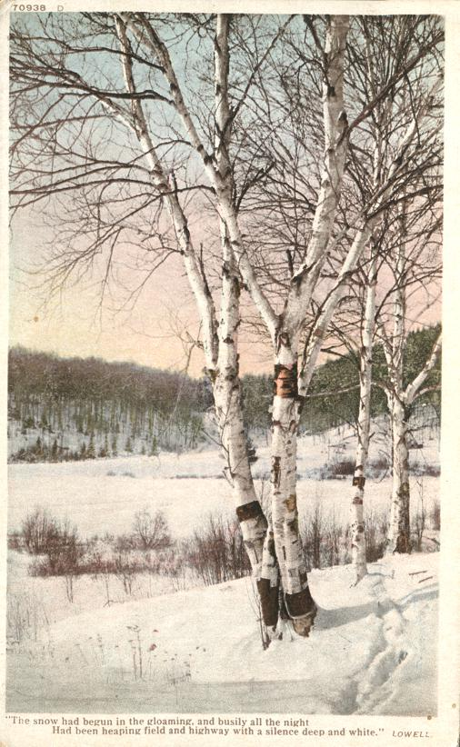 Birch Trees in Winter - Poem by Lowell - Divided Back - Detroit Publishing