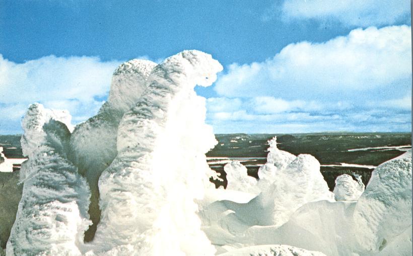 Snow encased trees on Two Top Mountain near West Yellowstone, Montana