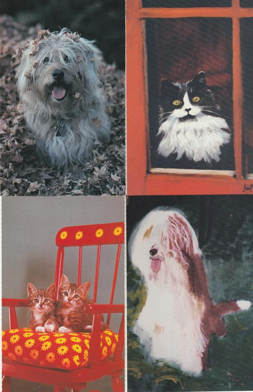 (4 cards) Sheepish Pets Sheep Dog Cats - North Shore Animal League