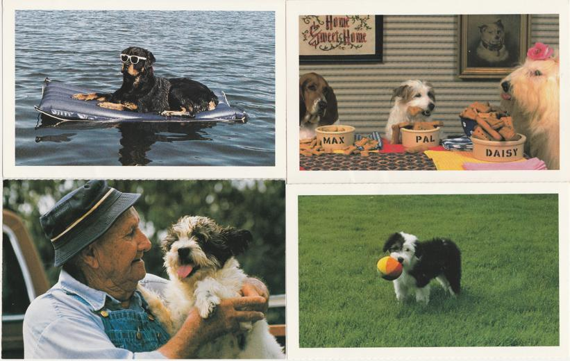(4 cards) Dogs Having Fun - North Shore Animal League