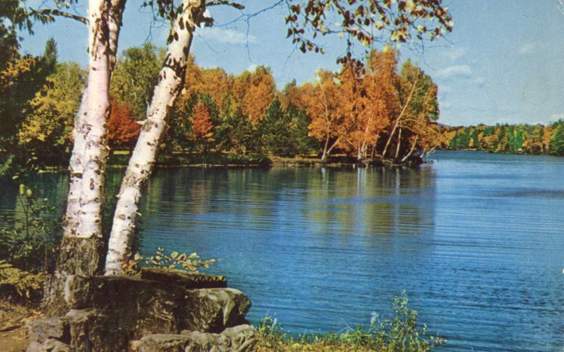 Birch Trees at Fish Creek Campground - Adirondack Mountains, New York - pm 1959 at Tupper Lake