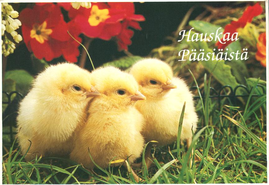 Baby Chickens - Hauskaa Paasiaista - Happy Easter Greetings from Finland - pm 1996 at Jyvaskyla