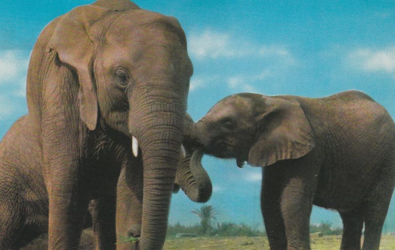 Elephants at Zoological Park, North Carolina - Animal