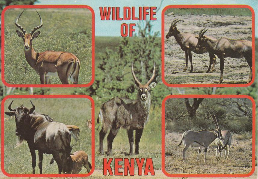 Wildlife of Kenya - Waterbuck Impala Topi Oryx