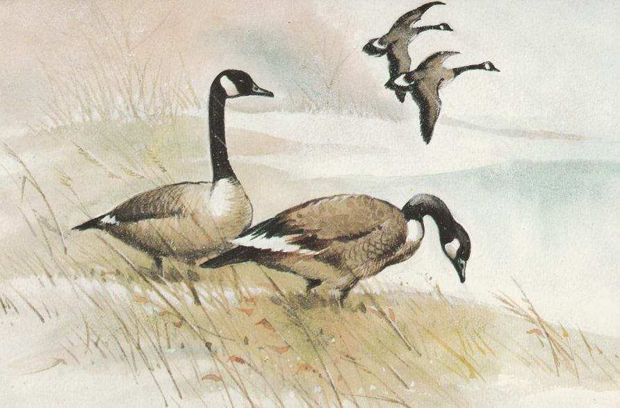 Canadian Geese - Merry Christmas Message