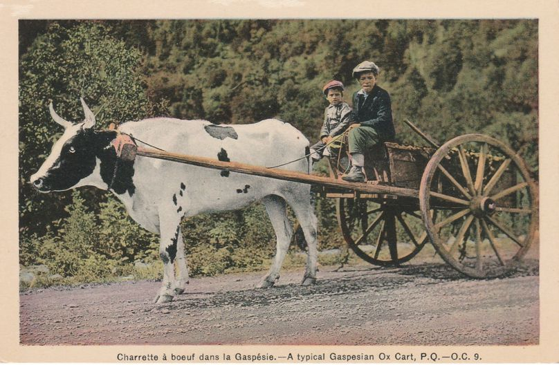 Boys on Typical Gaspesian Ox Cart - Gaspe, Quebec, Canada - White Border