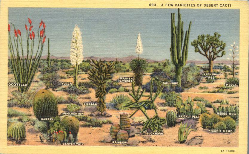 Varieties of Desert Cacti Flowers - Southwest United States - Linen Card