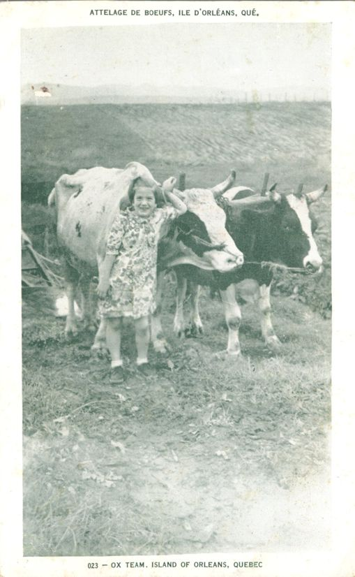 Girl with Ox Team - Island of Orleans, Quebec, Canada