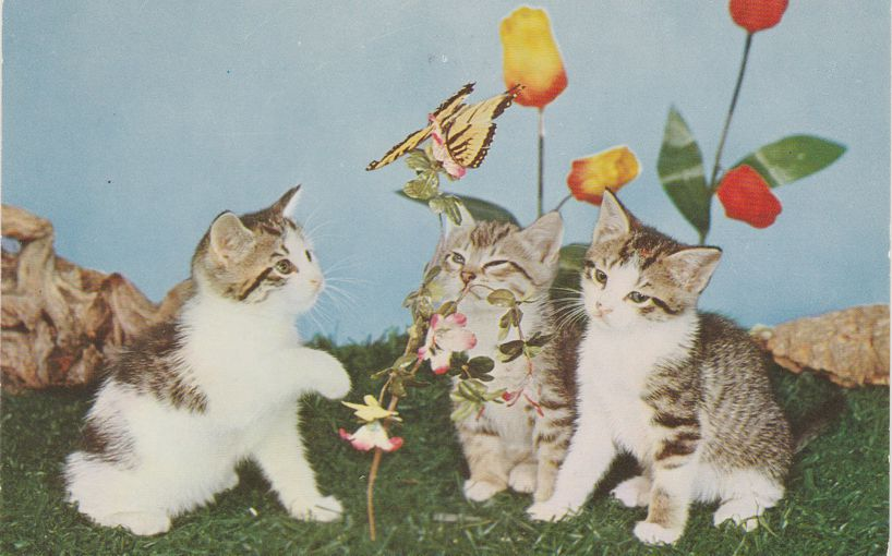 The Three Little Kittens - Butterflies and Flowers