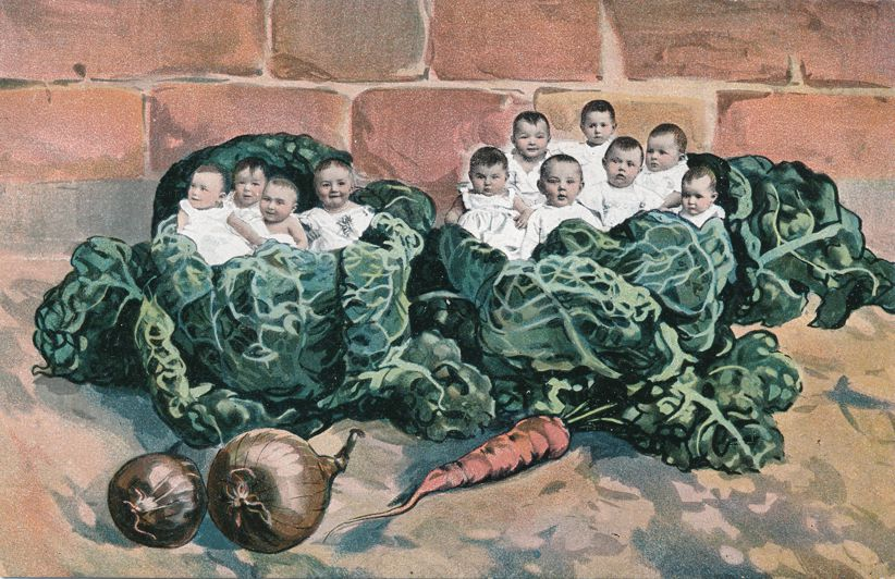 Multiple Babies Greetings in Giant Cabbage - Carrot and Onions - Divided Back