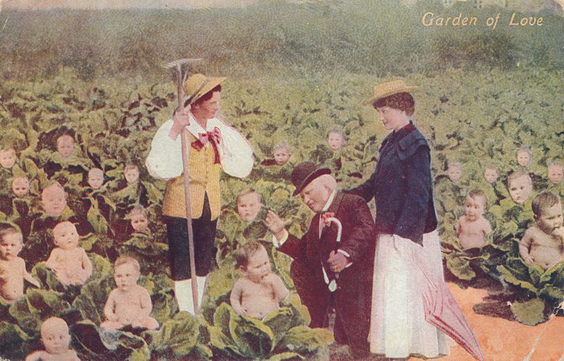 Garden of Love - Multiple Babies in Cabbage Patch - Greetings - pm 1908 at Iowa - Divided Back