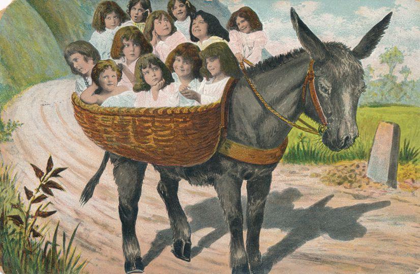 Multiple Babies Greetings - Donkey Basket of Girls - pm 1906 at Ottumwa Iowa - Undivided Back